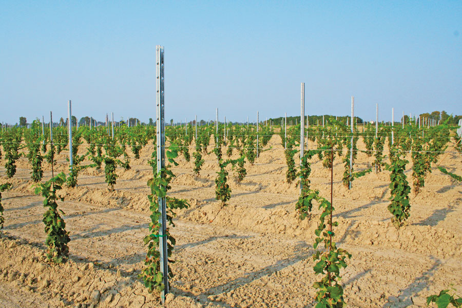 Steel Vineyard Posts Australia